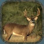 Whitetail Hunting Calls icon